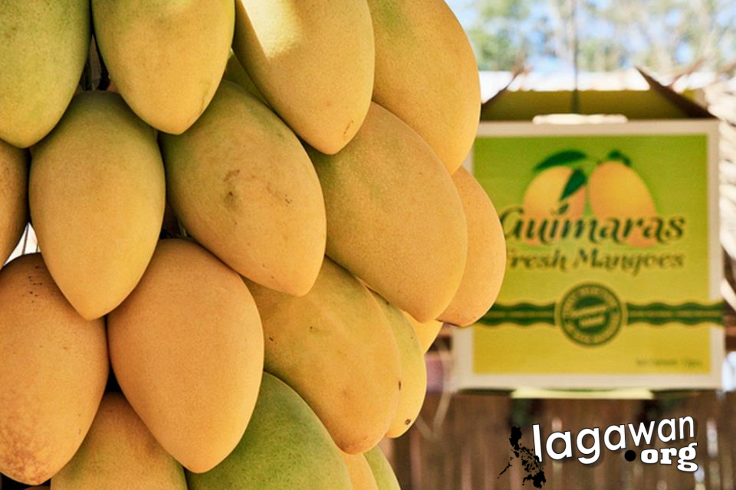 Guimaras Mangoes and Manggahan festival